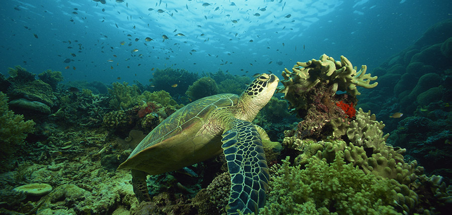 Sea Turtle spotted while diving