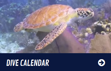 Dive Calendar